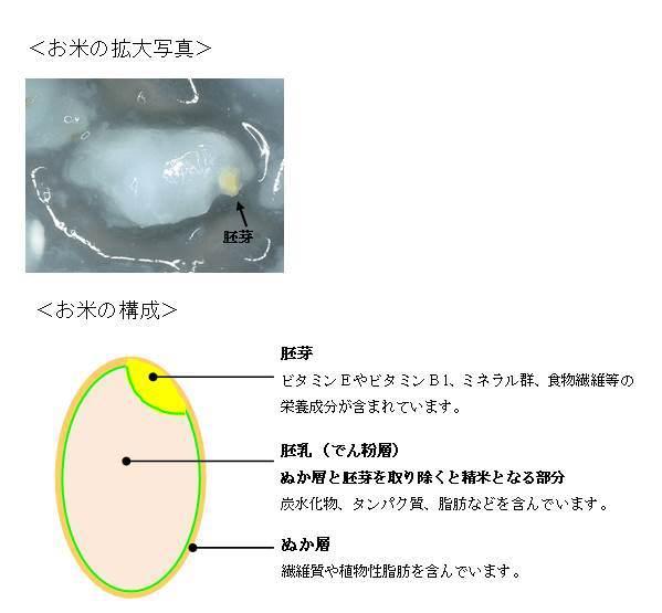お米胚芽写真②.jpg